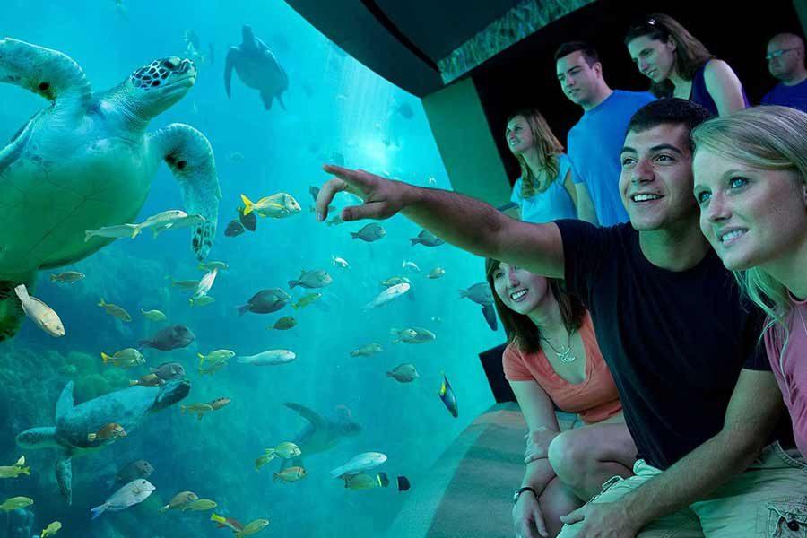 SeaWorld 5