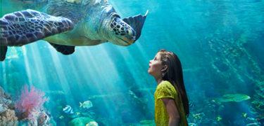 SeaWorld-Orlando-Turtle-Trek